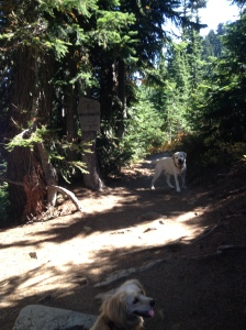 Welcome to the William O. Douglas Wilderness Area