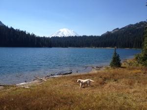 Mongo at the Lake