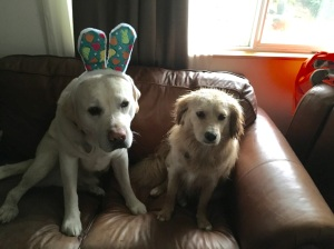 Easter Buddies