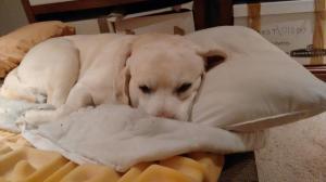 Tired Buddy