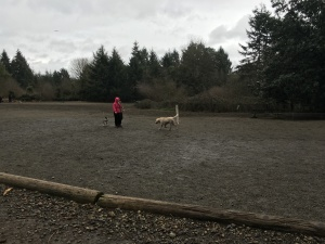 Westside Dog Park