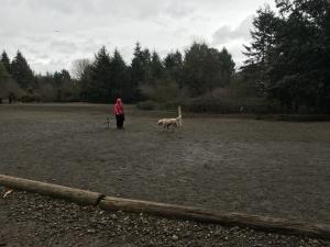 Westside Dog Park