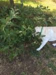 Mongo find magic apple tree!